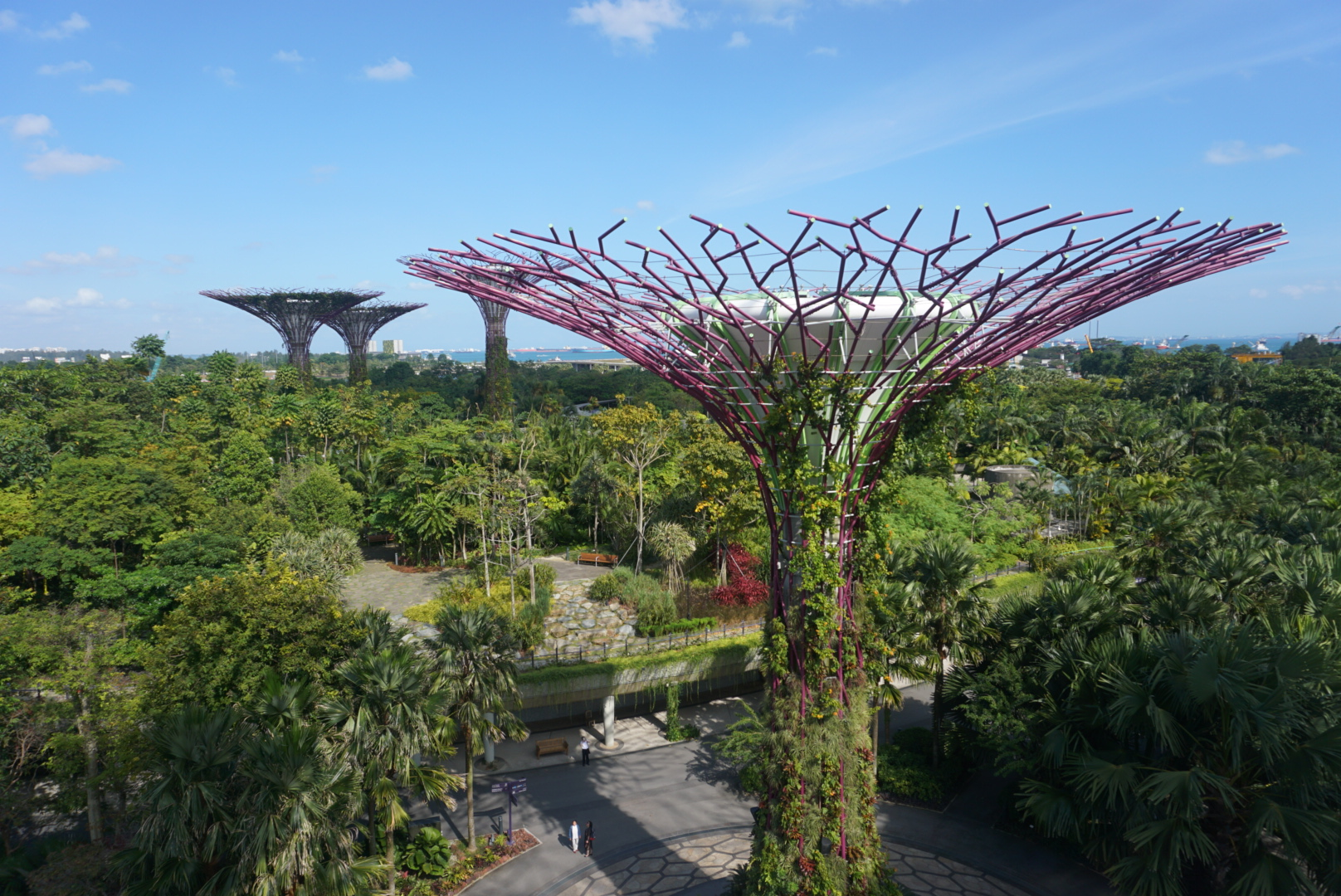 Skywalk on the Super Trees at the Gardens by the Bay in Singapore. boldlygotravel.com