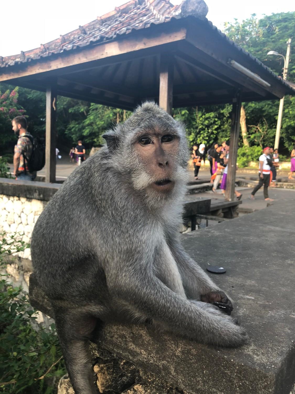 Monkey at the Uluwatu Temple, Bali. Boldlygotravel.com