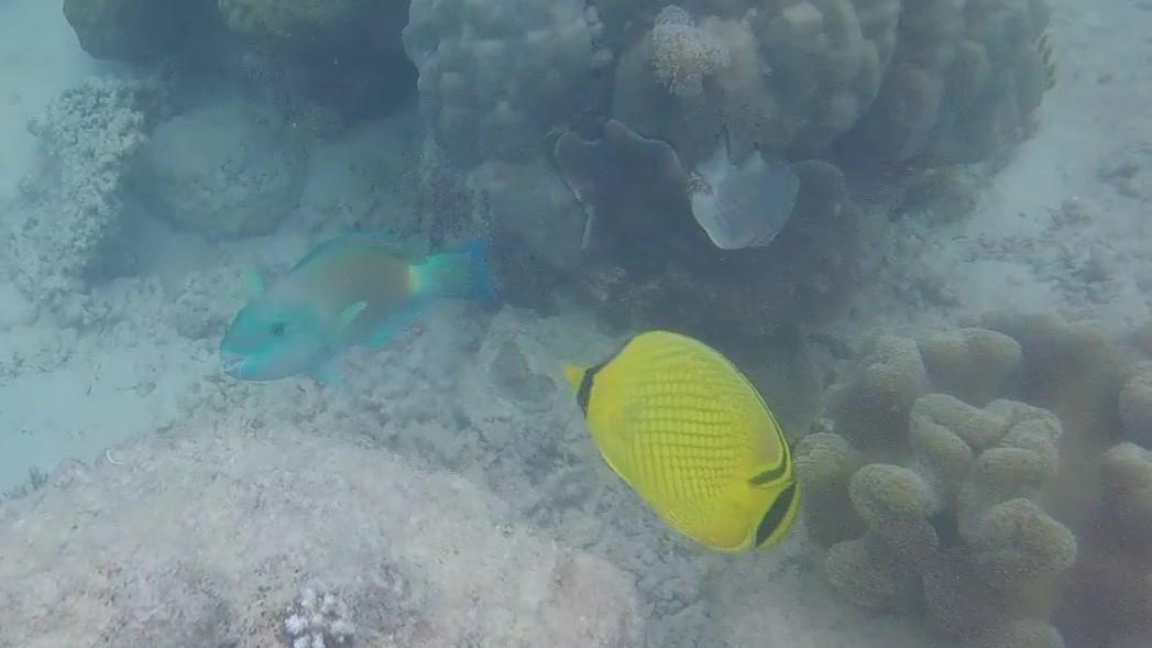 Great Parrot Fish Trim_Moment_Moment (2).jpg