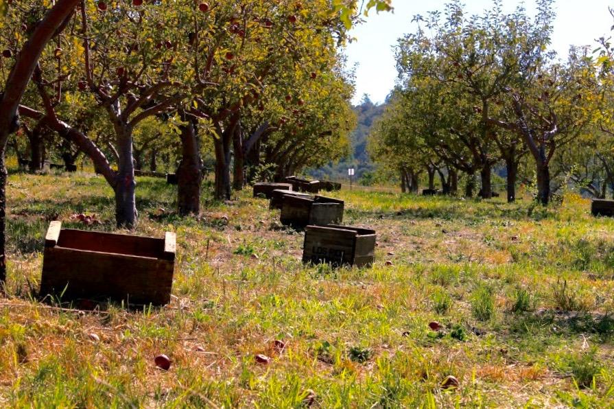 apple crate.jpeg