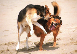 2DogsFighting.jpg