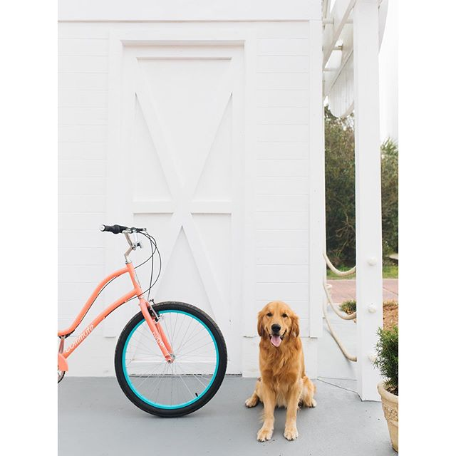 Finally getting around to sharing an image from the story I did for the @southernlivingmag Instagram feed + City of PCB. Barkley, the bike shop dog, showed up at the last minute and thankfully, was more than OK with being my model. Need more beach shoots in my life. 🏖 . . . . . #travelphotography #beach #travelphotographyoftheday #travelphotographyguide #southernliving #travelphotographysociety #travelphotographyclub #travelphotography📸 #travelphotographylovers #travelphotography📷🌍 #travelphotographyl #travelphotographyp #panamacitybeach #travelphotographygirl #travelphotographyawards #florida #travelphotography_bw #travelphotographys #travelphotographydiaries  #travelphotographycity #pcb #mysltravels #travelphotography2019 #travelphotographyt #travelphotographya #travelphotographyh