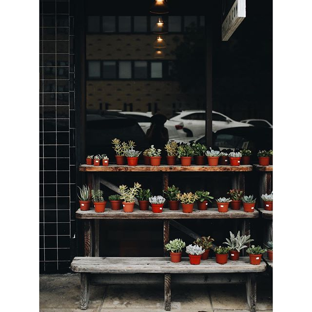 Do you ever take photos that predict your future? Captured this scene in downtown Austin last June. Little did I know a year later I'd have a steady gig photographing plants. I love taking photos of people first and foremost but plants don't move or notice your awkwardness and that's always a good thing. 🌱 📷⁣⁣ .⁣⁣ .⁣⁣ .⁣⁣ #greenvibes #botany #crazyplantlady #plantsagram #plantsofinstagram #plantsmakemehappy #greenthumb #plantstyling #plantlove #plantlife  #creativequarter  #houseplantsofinstagram #houseplants #theplantedgram #plantlove #houseplantlove #plantlife #exteriorstyling
