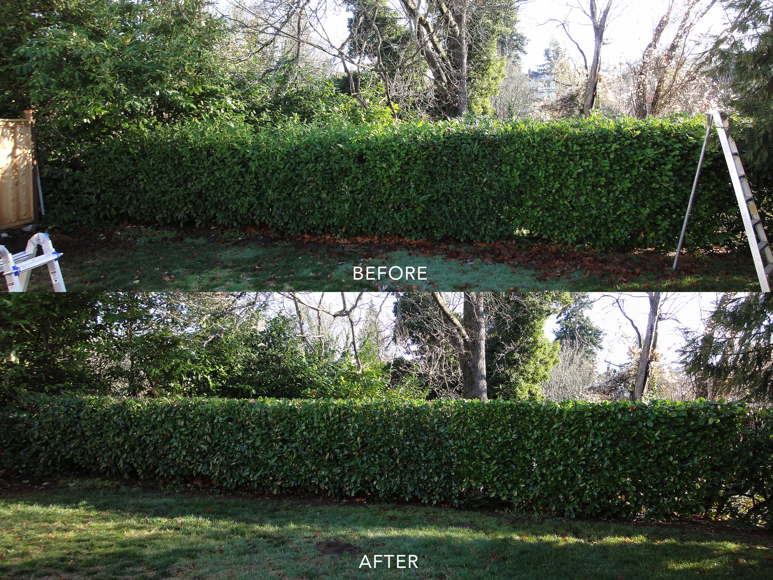 Hedge Pruning