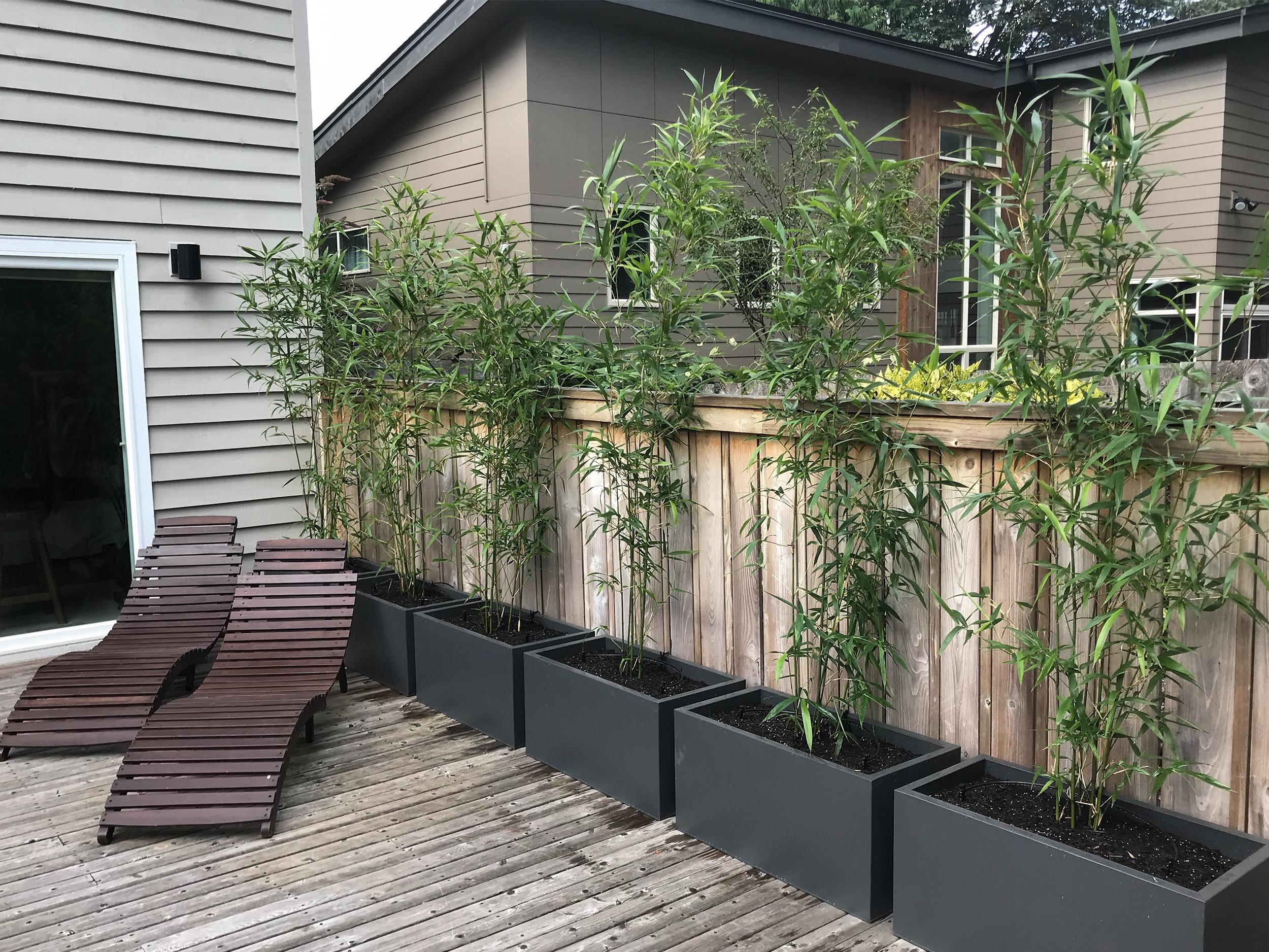Bamboo Privacy Screening
