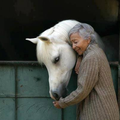 Ojai-horse.jpg