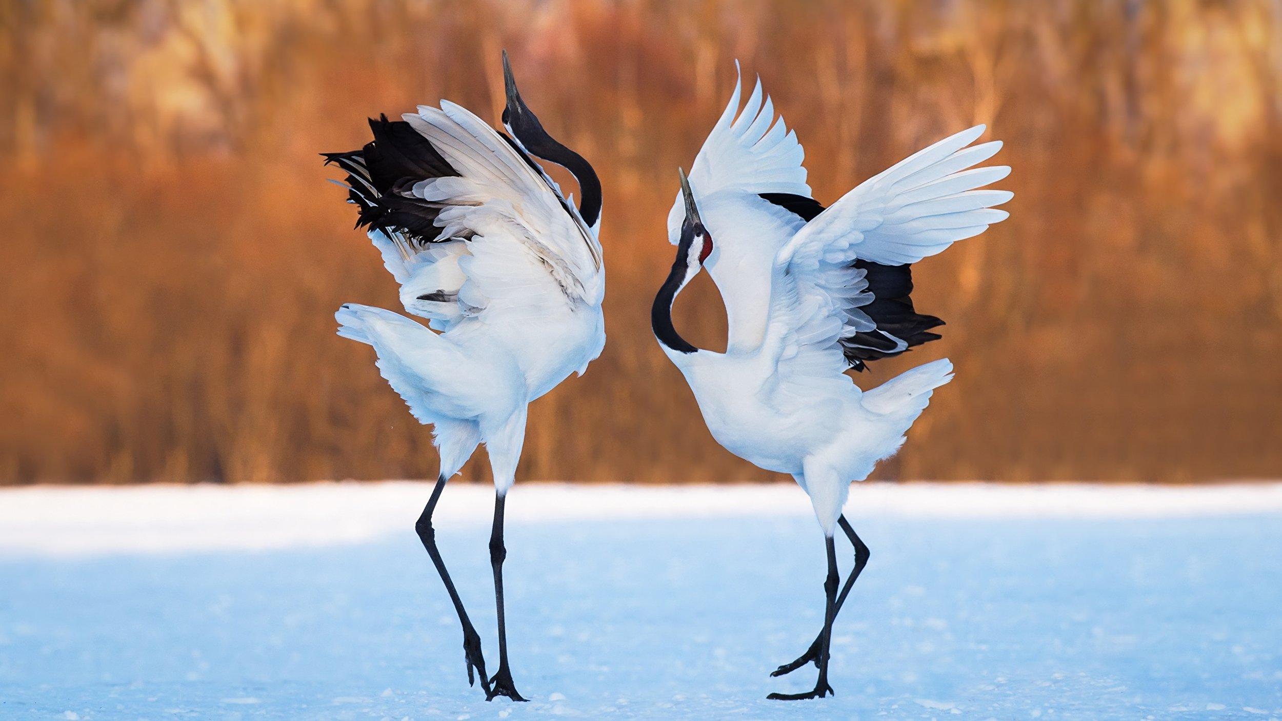 HeronMatch.jpg
