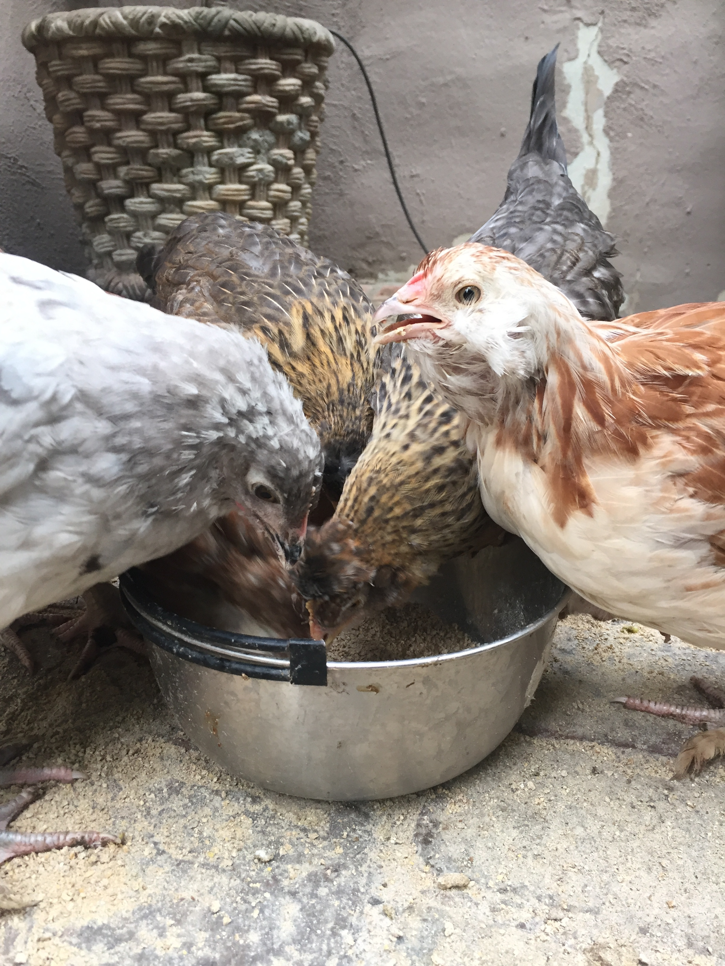 Five of the six babies huddle around breakfast