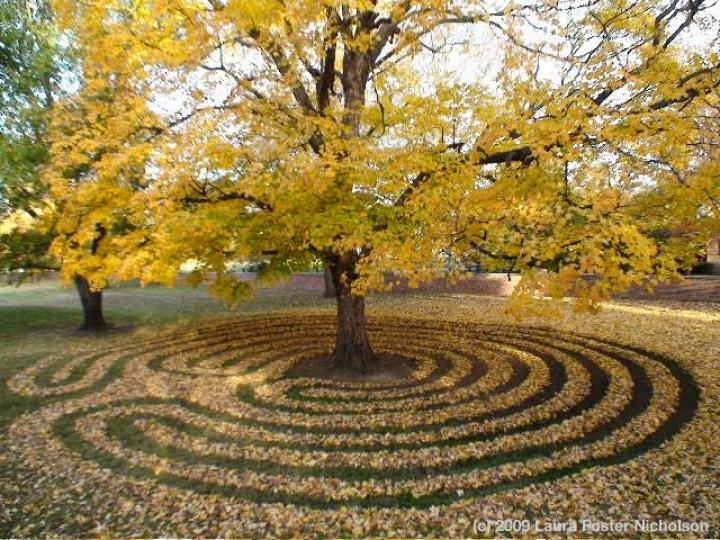 A 7-circuit labyrinth made of raked leaves leads to a tree