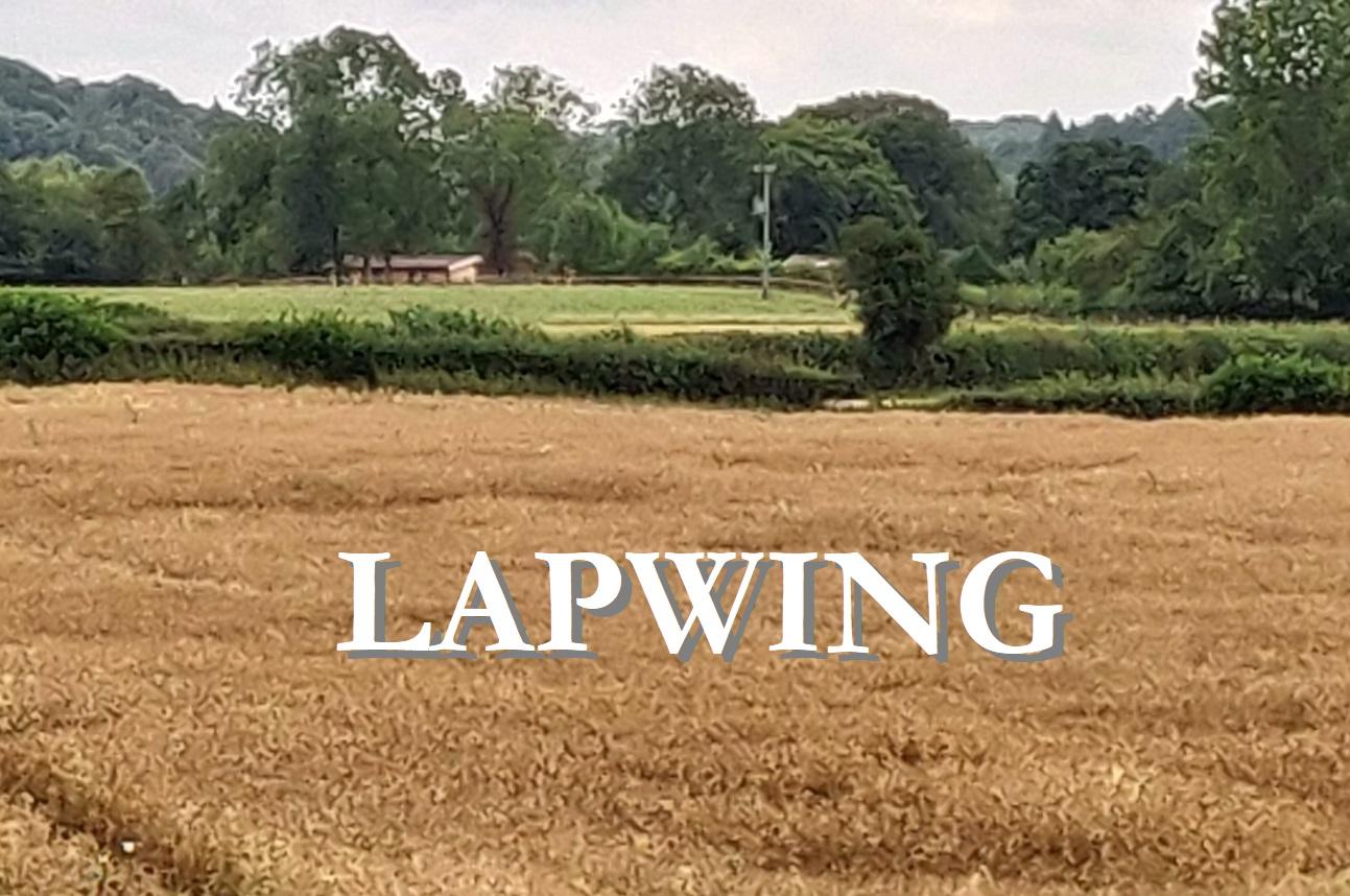 Lapwing met tekst.jpg