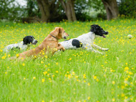 3 Dogs vierkant.jpg