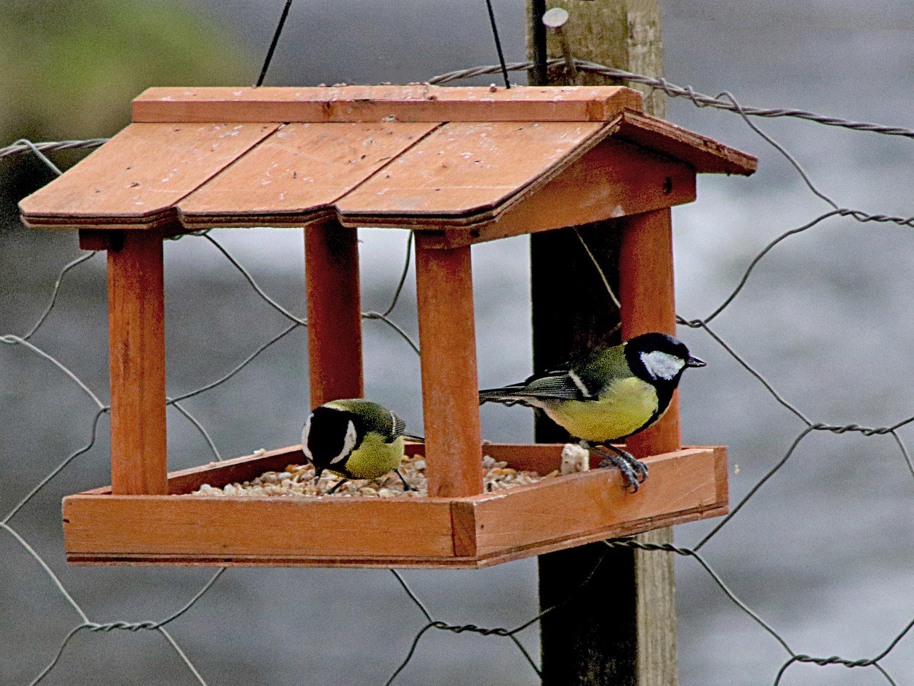 birdfeeder cropped.jpg