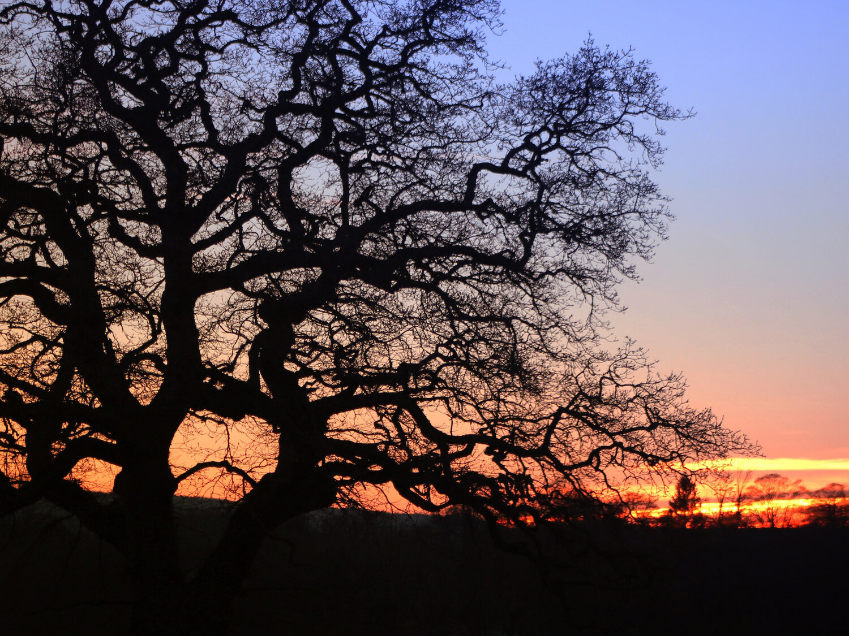 4x3 tree red sky.jpg