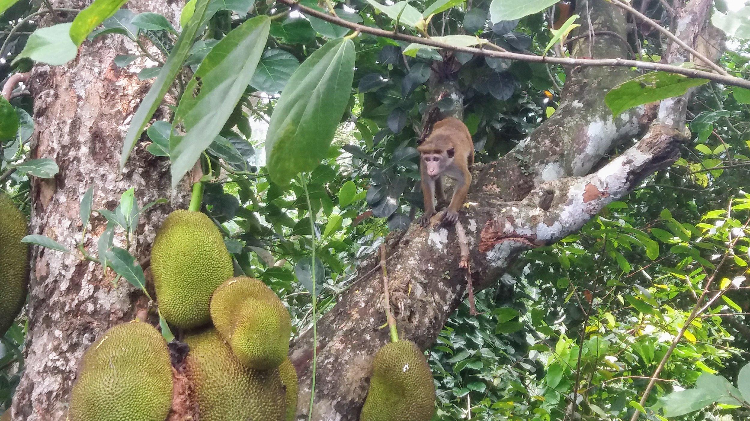 Fauna - Monkey on Jack.jpg
