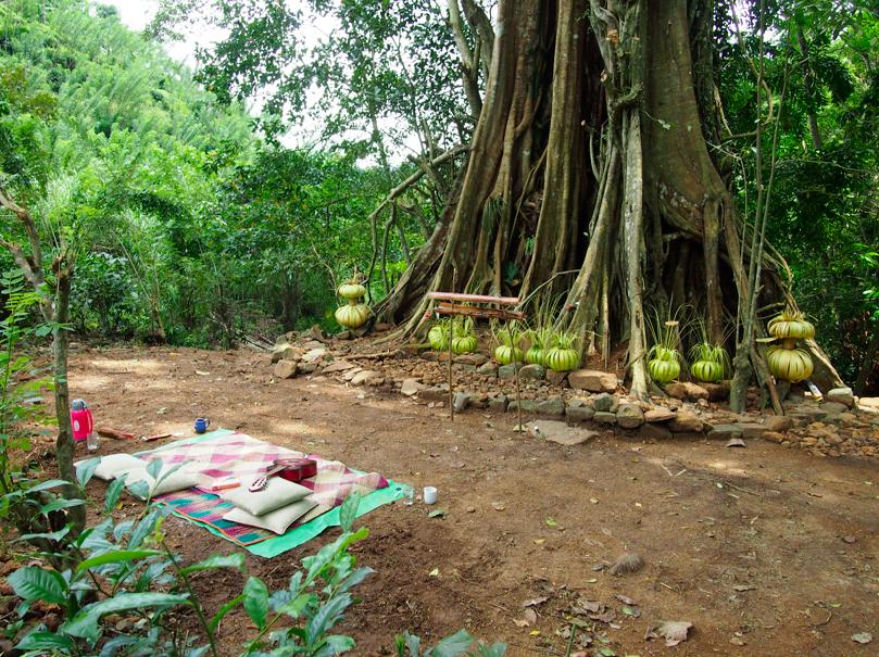 nube tree meditation area.png
