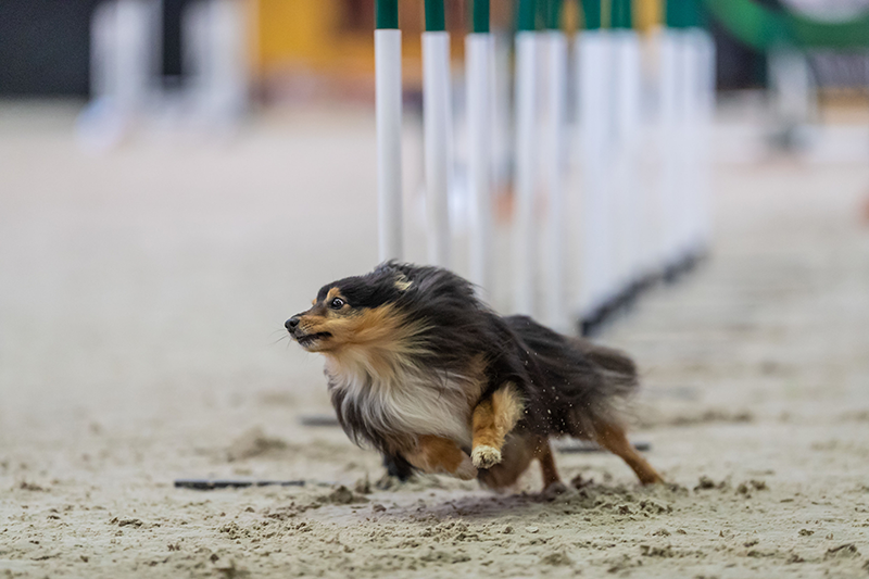 World-agility-open-2018-Jessi-landen-aginotes.png