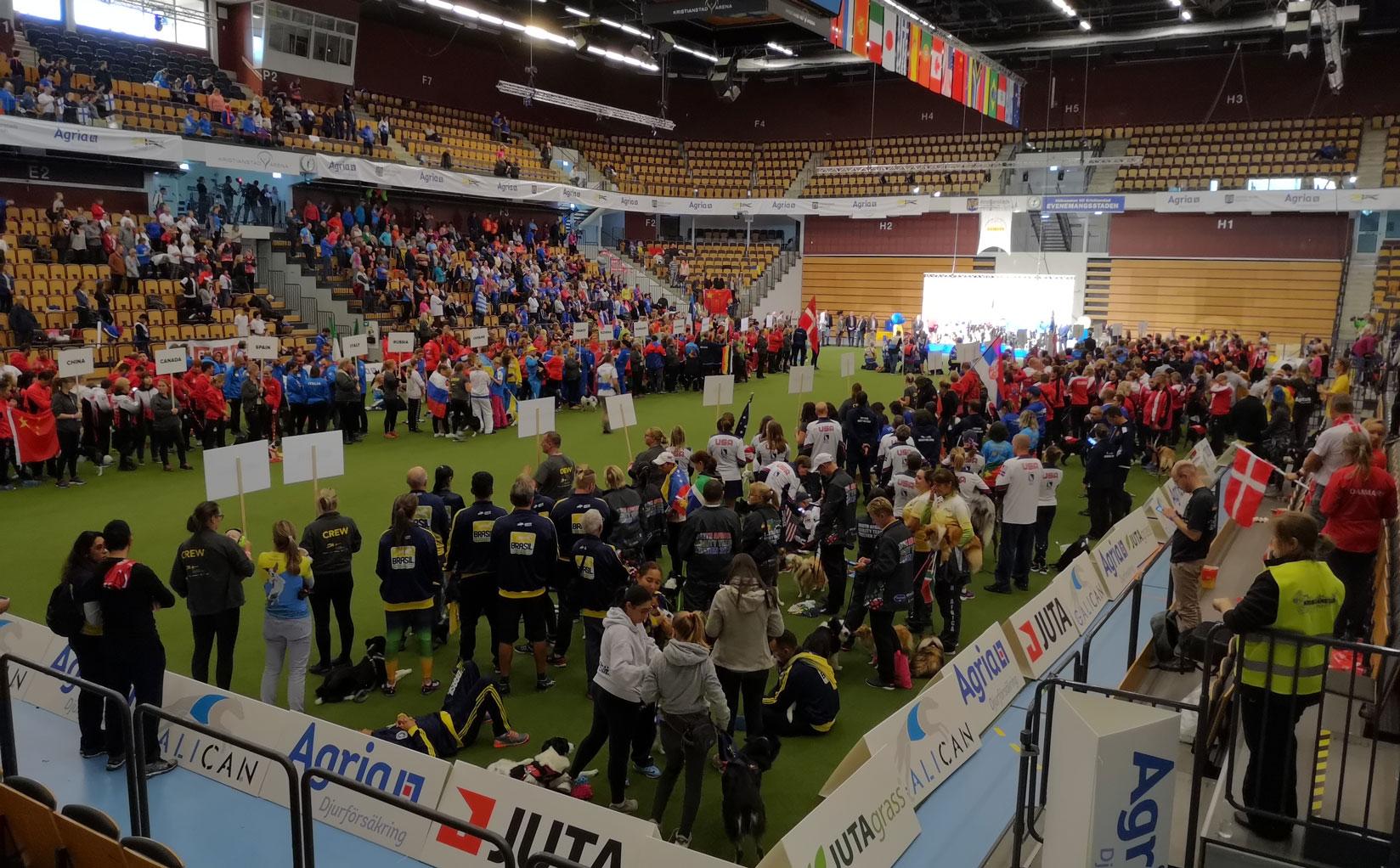 Agility-world-championships-2018-awc-analysed.jpg