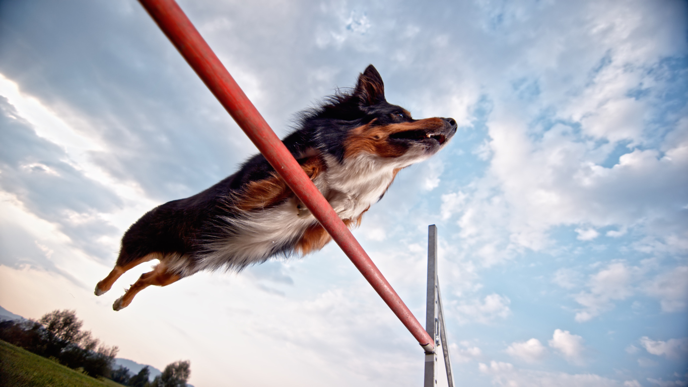 perform better in agility competitions by using rituals