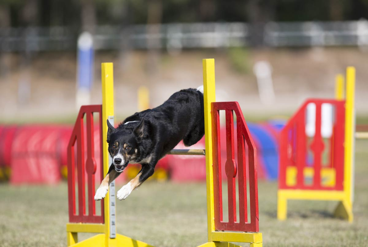 Biggest-agility-competitions-in-europe.jpg