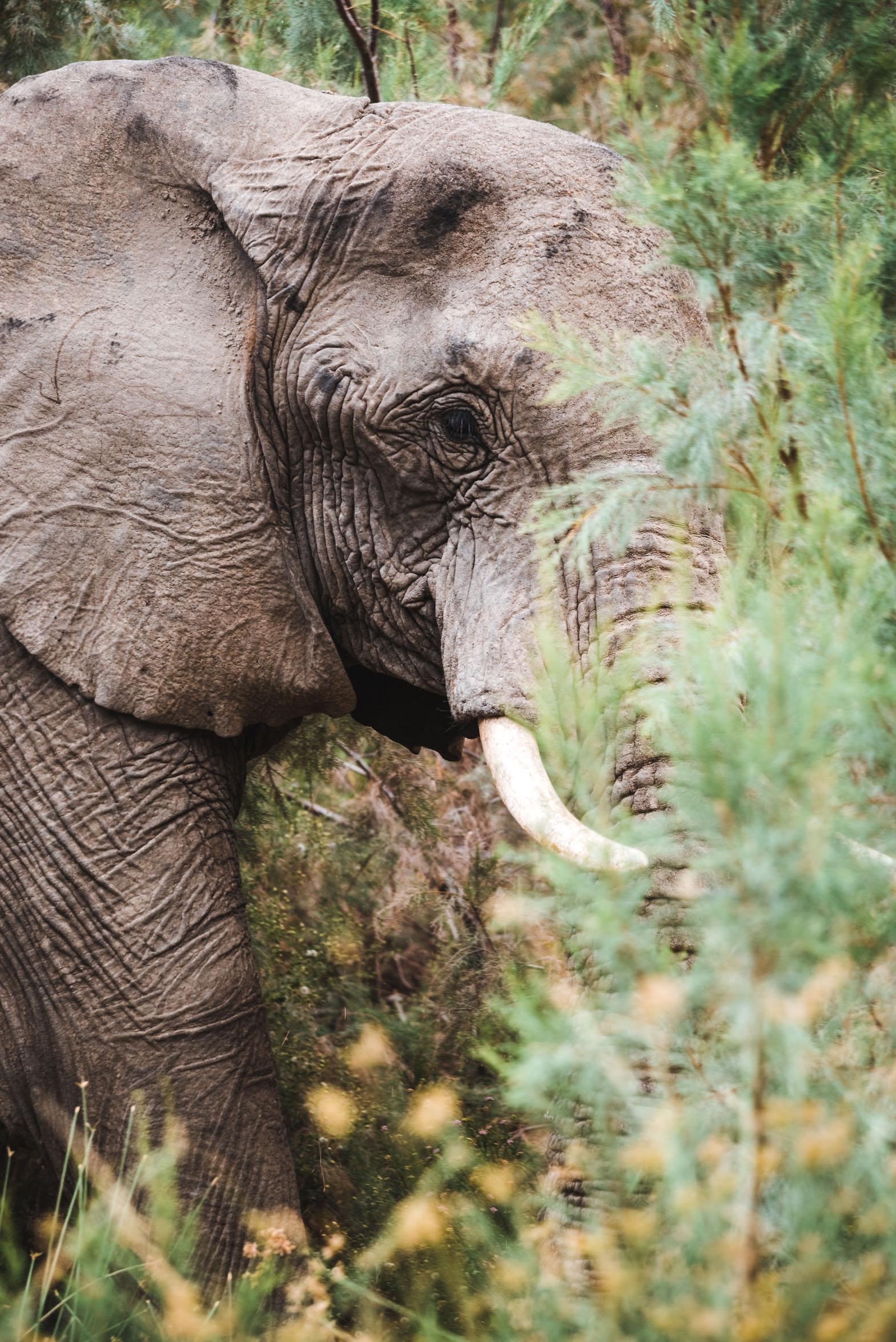 NAMIBIA-3171.jpg