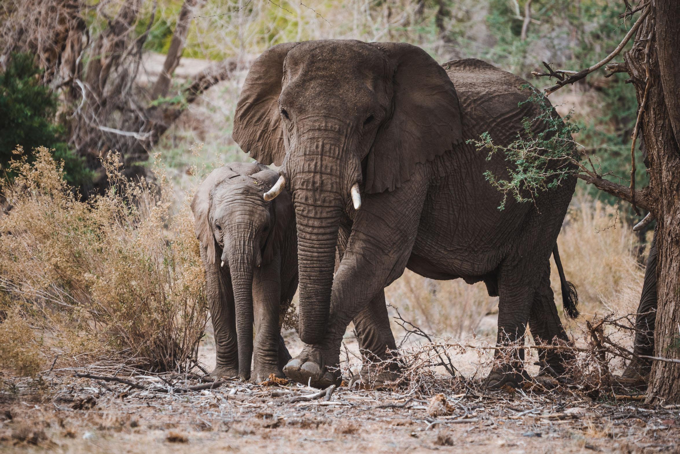 NAMIBIA-3350.jpg