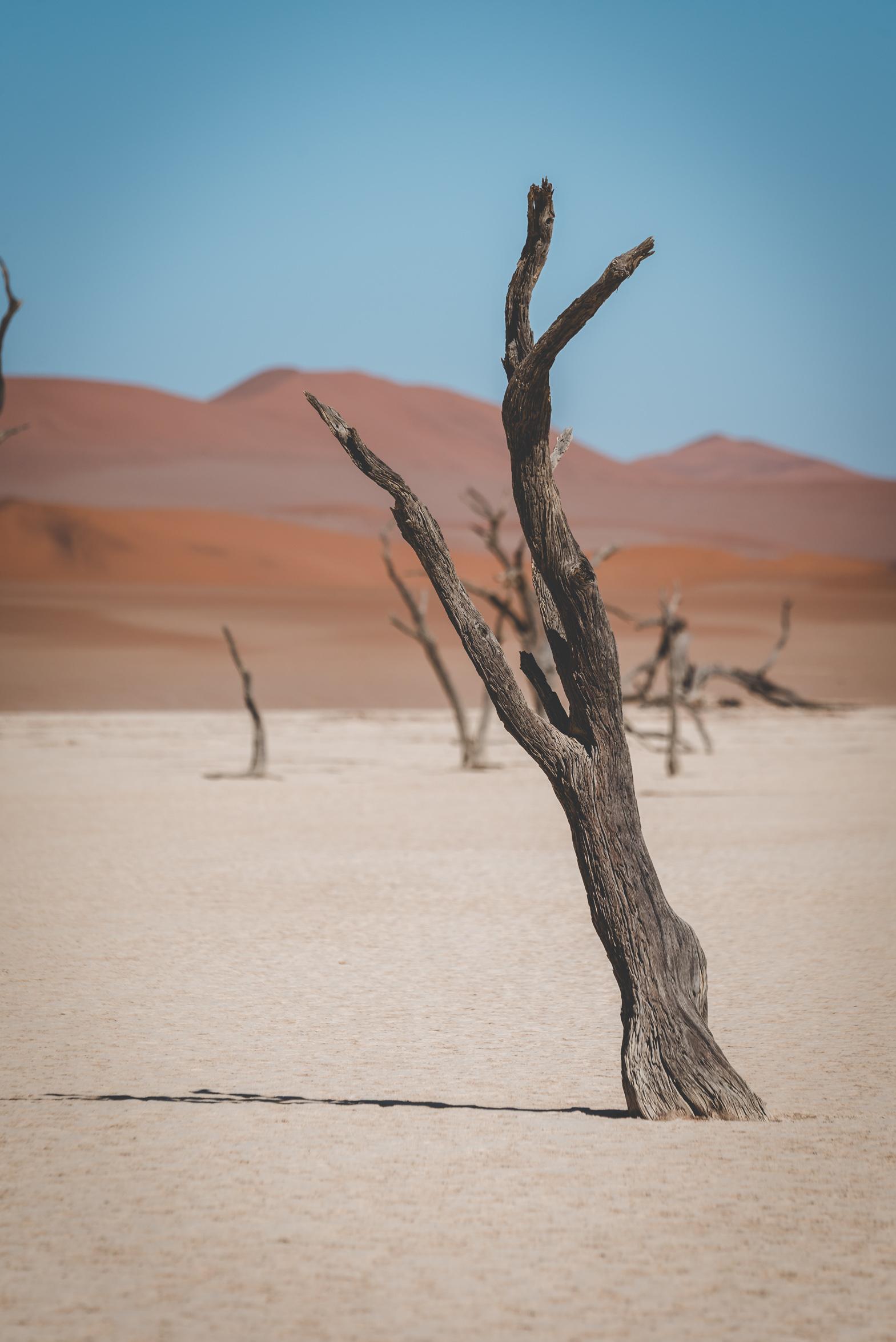 NAMIBIA-5591.jpg