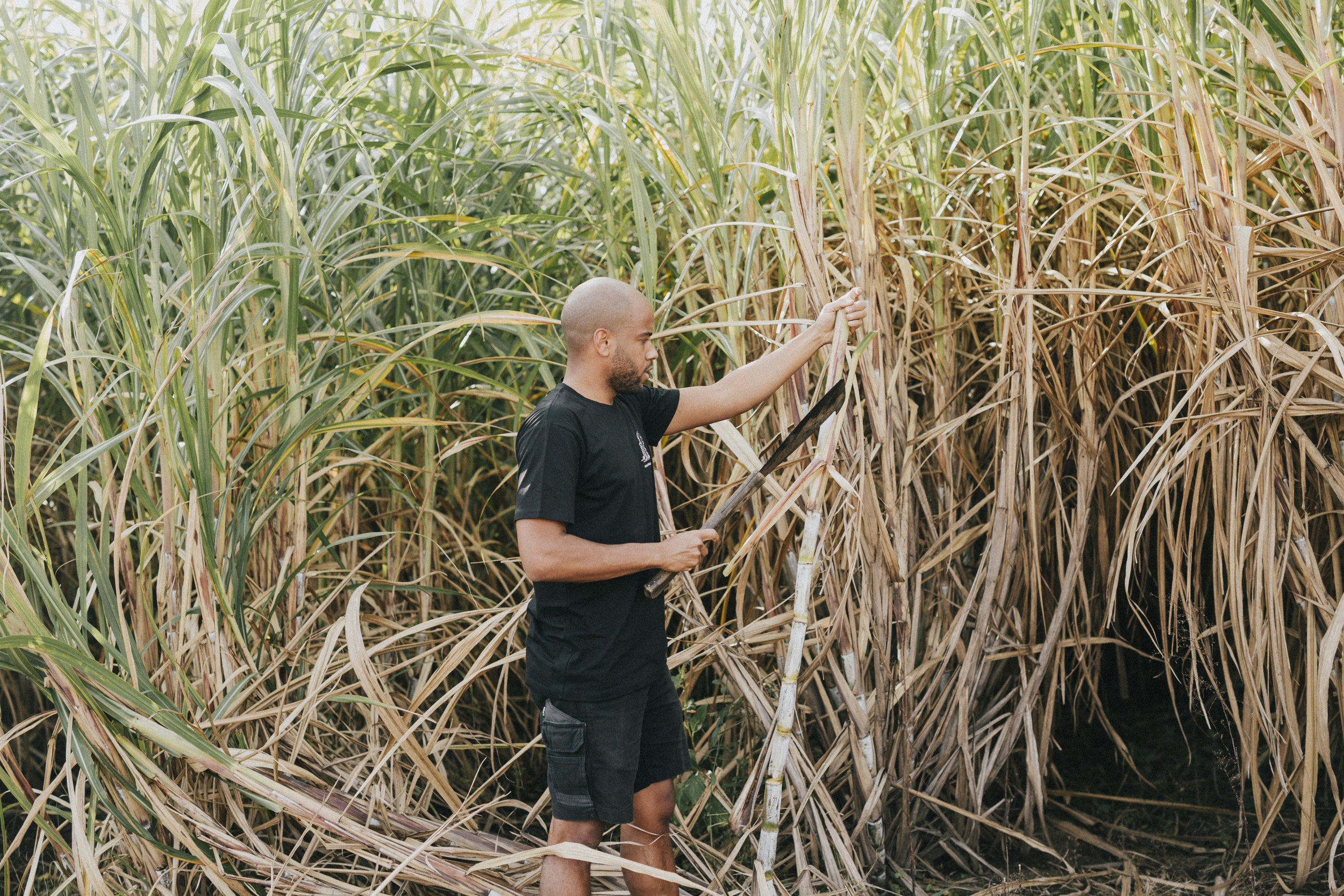 Distiller Quentin in the cane field