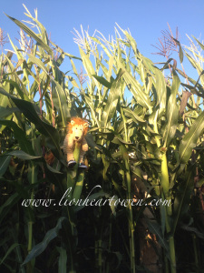 Uh oh… Someone is stuck in the cornmaze