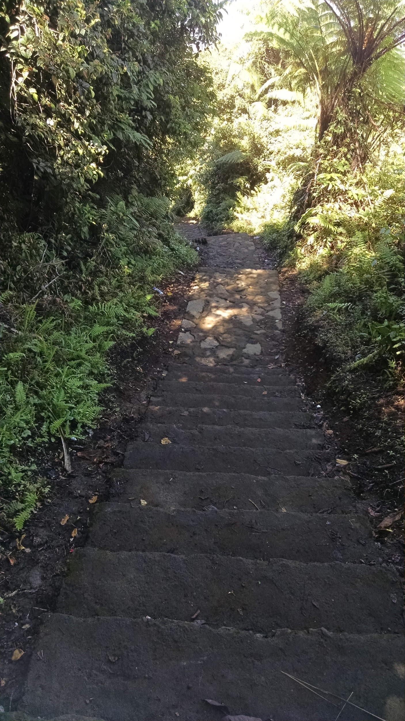 Steps 800 of 1700