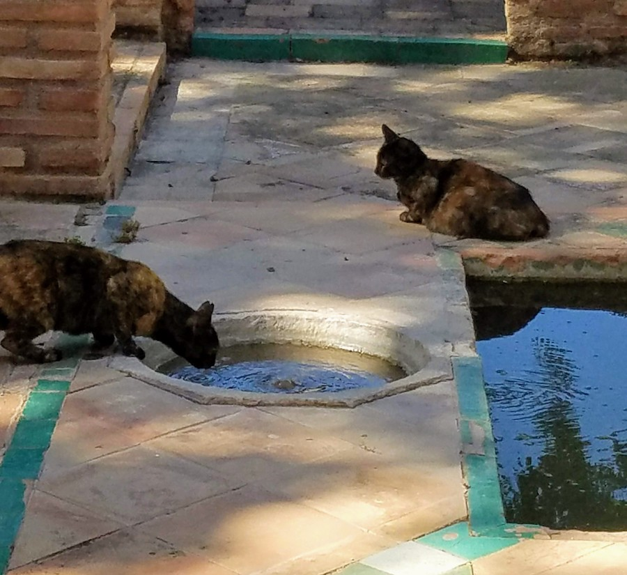 Alhambra cats deigning to drink out of historic fountains