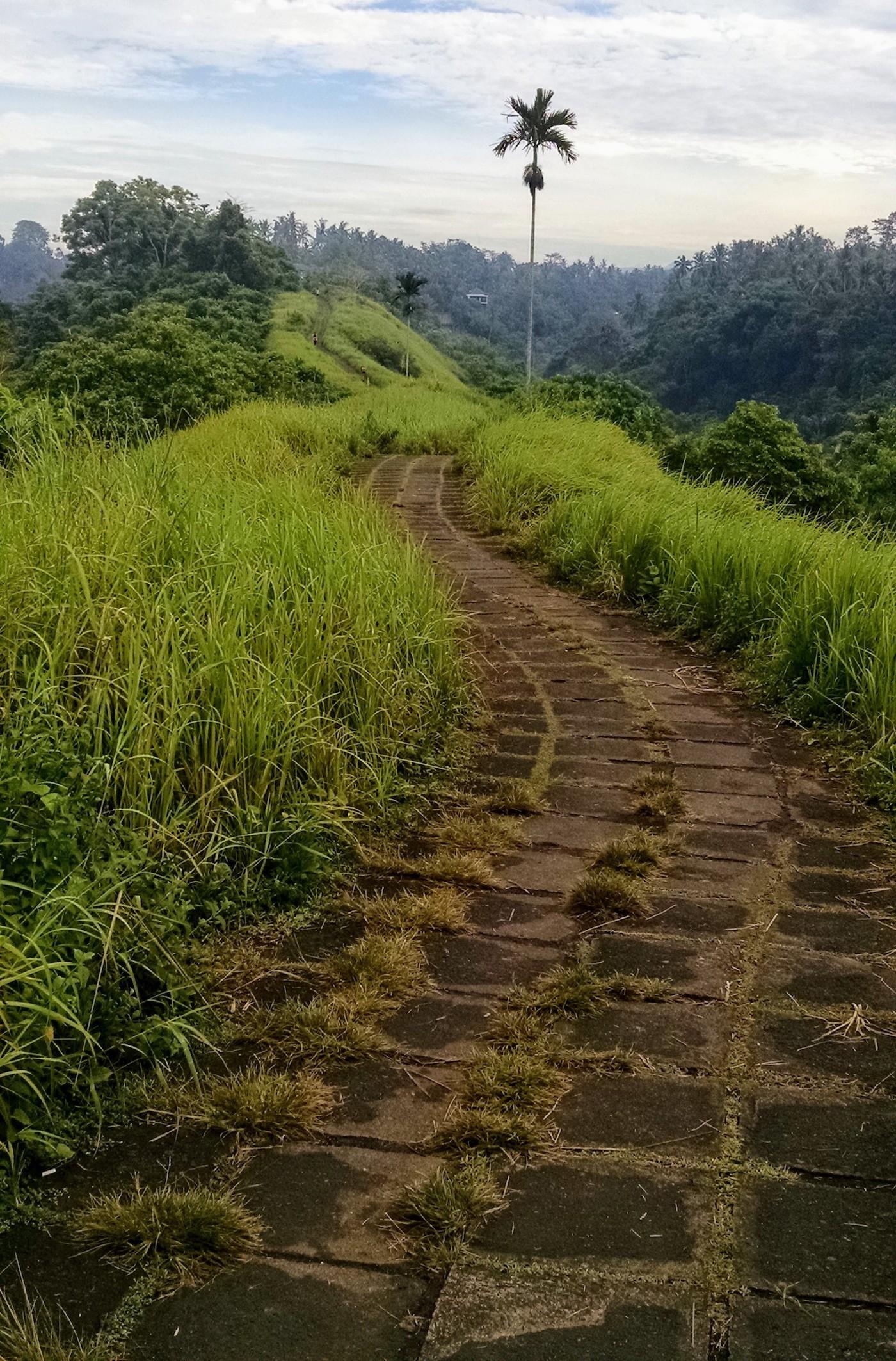 Ridge walk, mid-morning