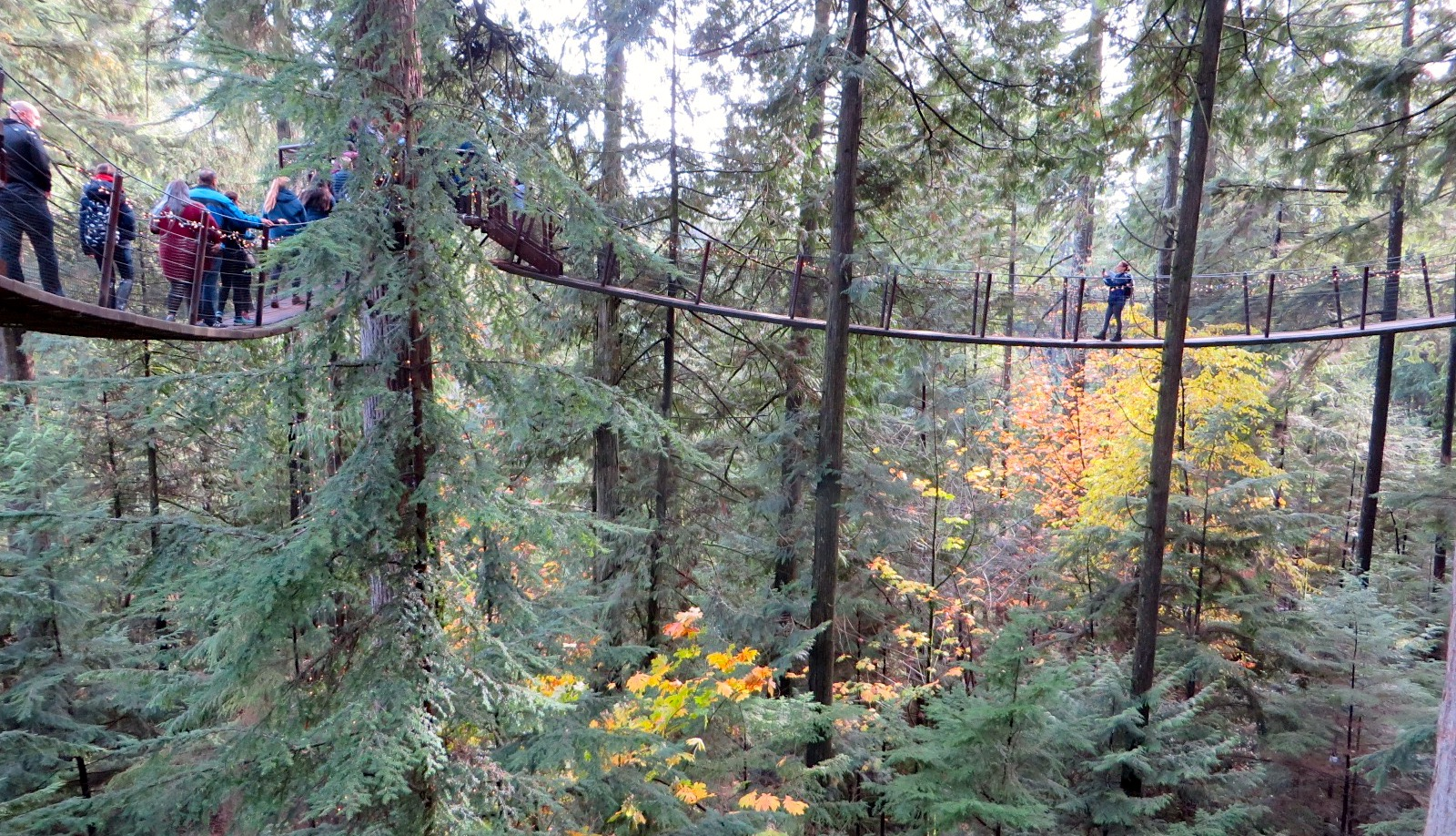 A walkway high up in the treetops at Capilano Suspension Bridge Park