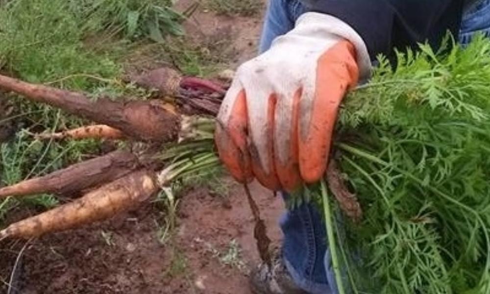 hand holding carrots banner.jpg