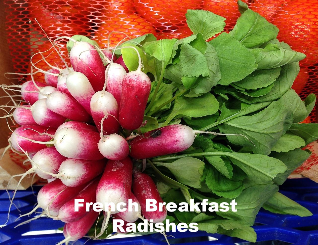 french breakfast radishes.jpg
