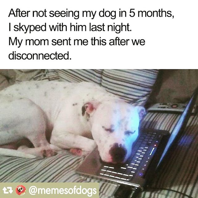 "- Yeah, we ""humans are just anthropomorphizing our relationship with dogs, and they really don't have the capacity to reason, or have real emotions, or connection with us."" . And I say to that, bulshit! . . . . #IGpotd #instagood #skype #instadog #IGdogs  #I❤dogs #IGpups  #🐶 #doggielove  #Ilovedogs #doggiestyle #dogslove #companions #puppy #dogs #doggies #puppy #puppylove #instadogs #pupsofinstagram #dogsofinstagram #green"