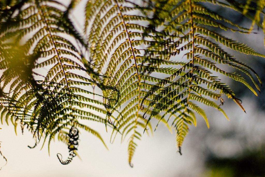 Ferns-Small.jpeg