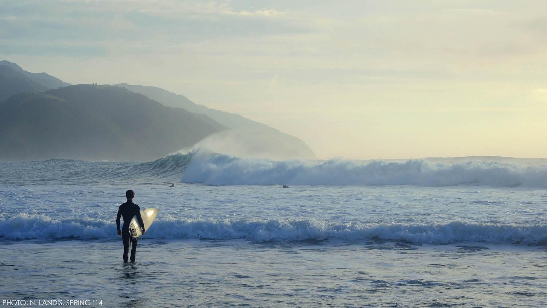 Surfing Kaiks - SS Size.jpeg
