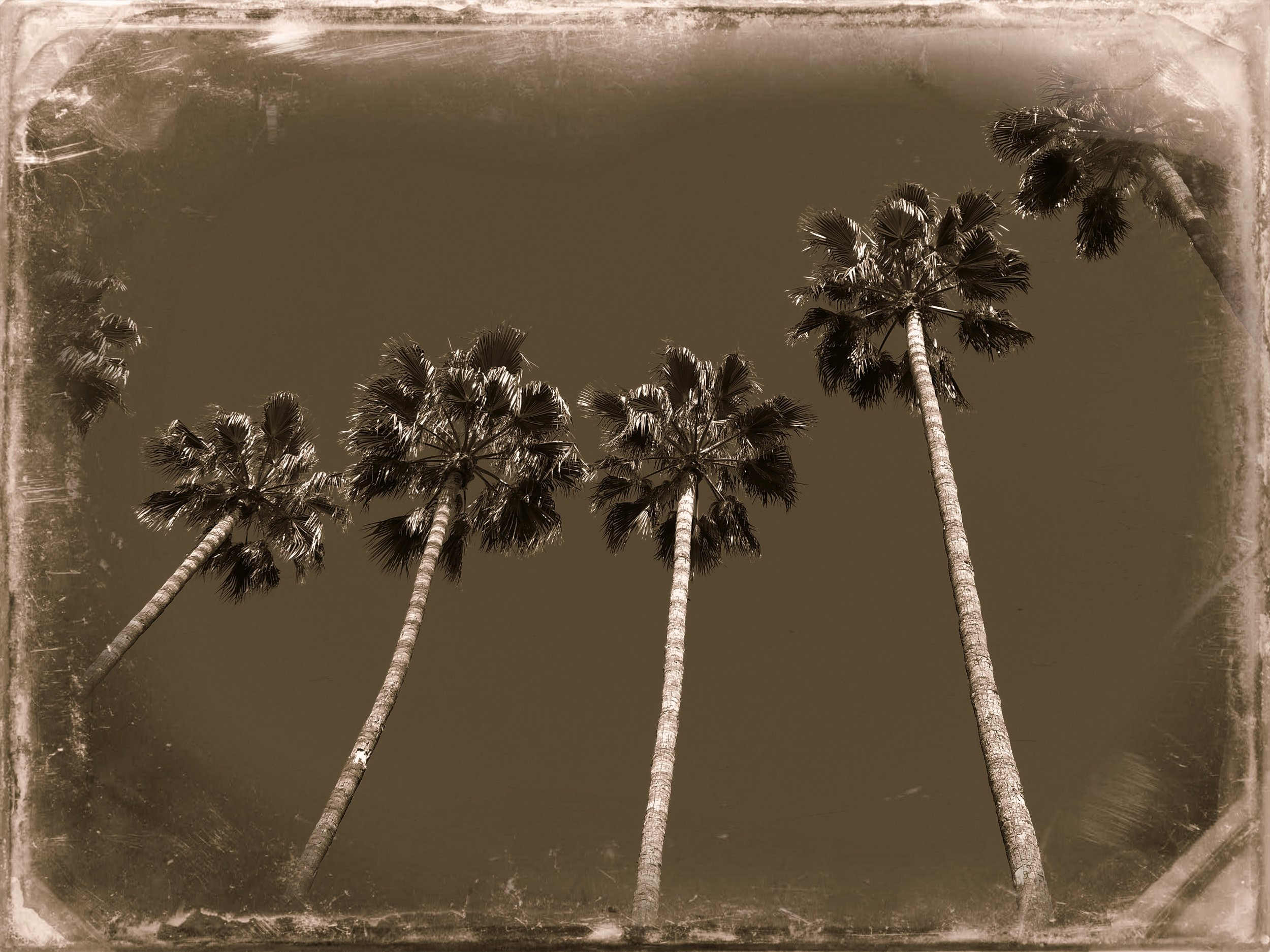 Palm Trees at Azuza - old effect.jpg