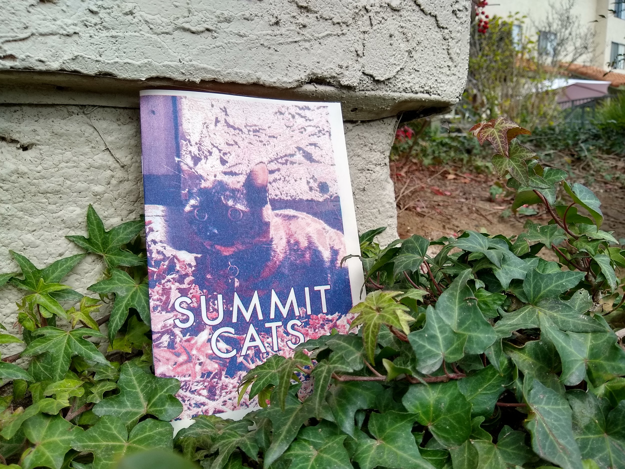 Summit Cats Zine