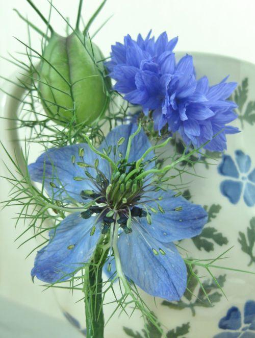 blue flower.jpg