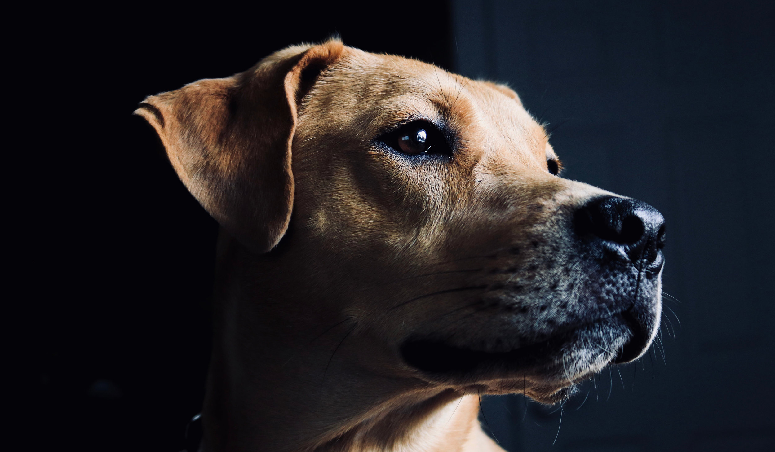 Animal Law - We work with people who love animals in order to preserve the well-being of companion animals, wildlife, and so-called utility animals alike.
