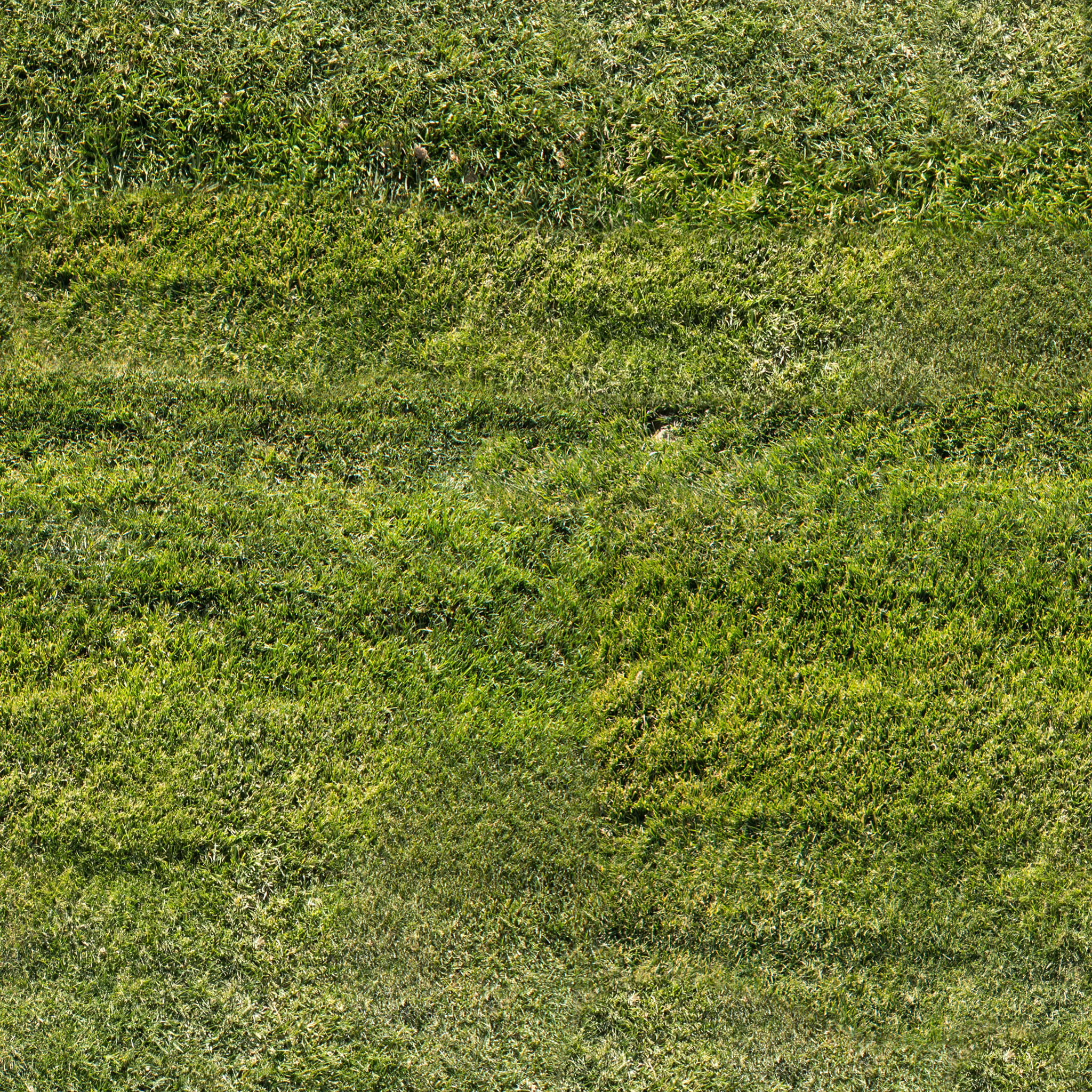mowed-grass.jpg