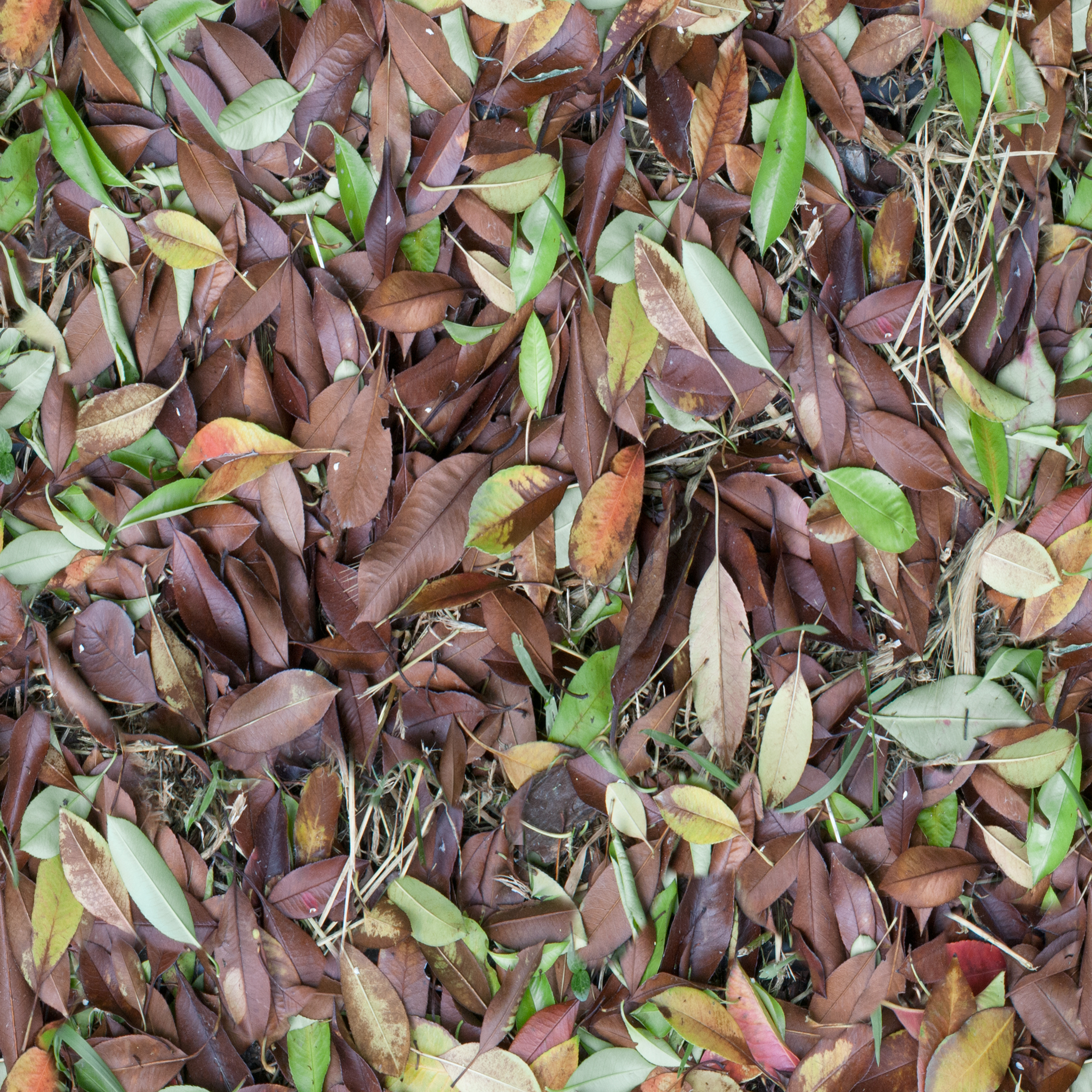 brown-and-green-leaves.jpg