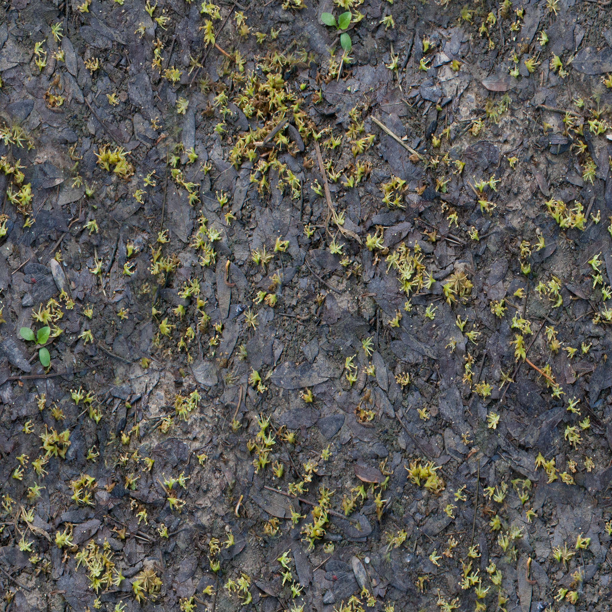 decaying-leaf-litter.jpg