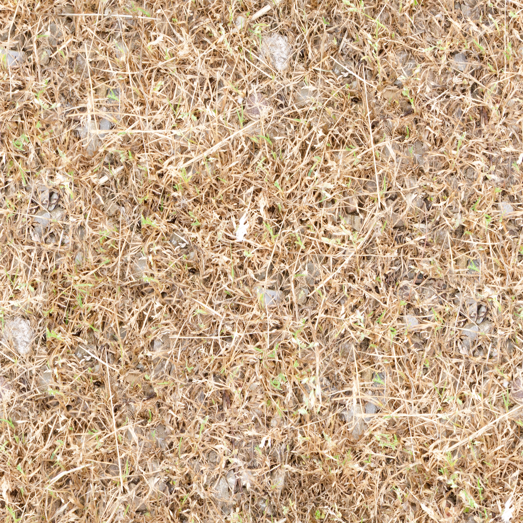 dried-field.jpg