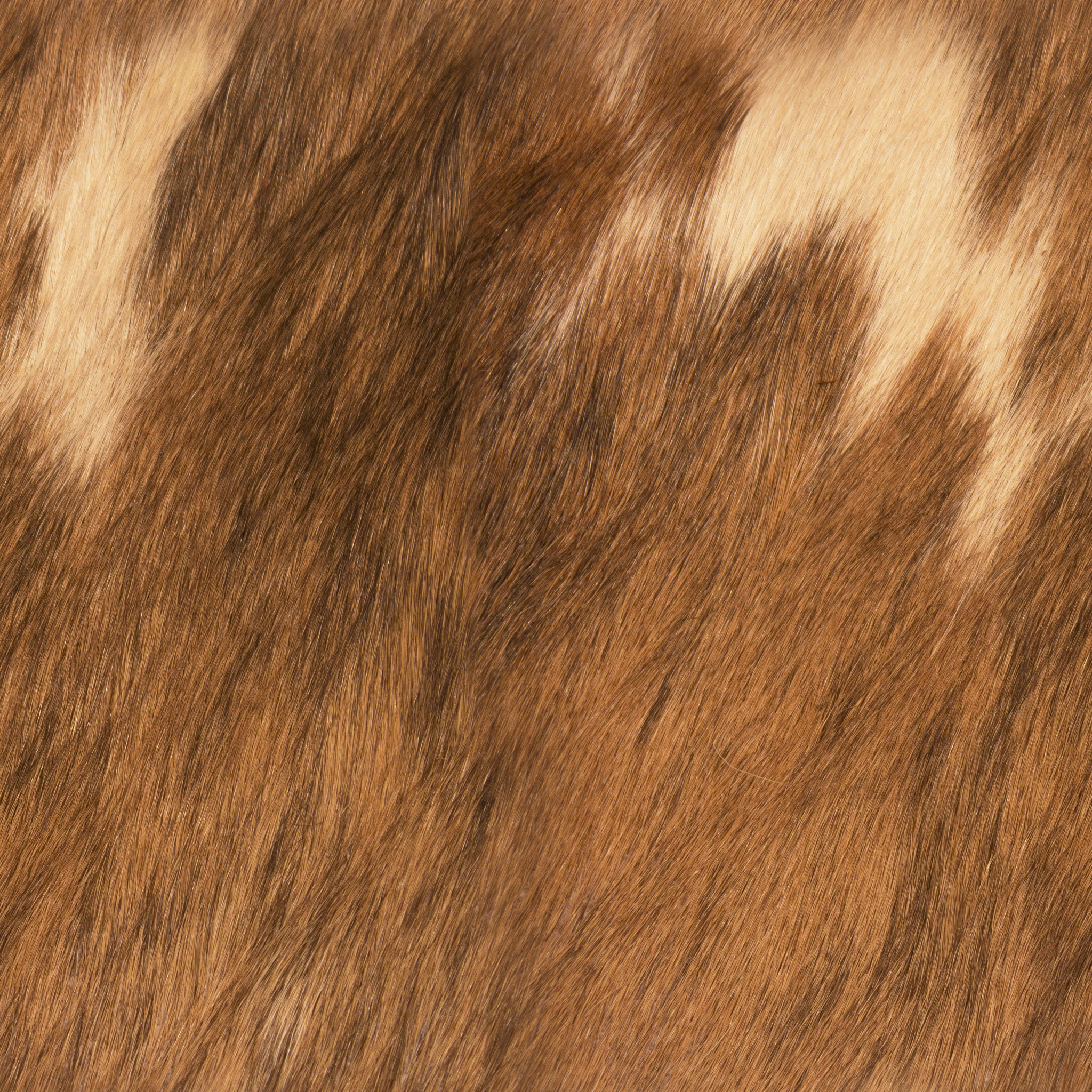 Furry Brown Leather.jpg