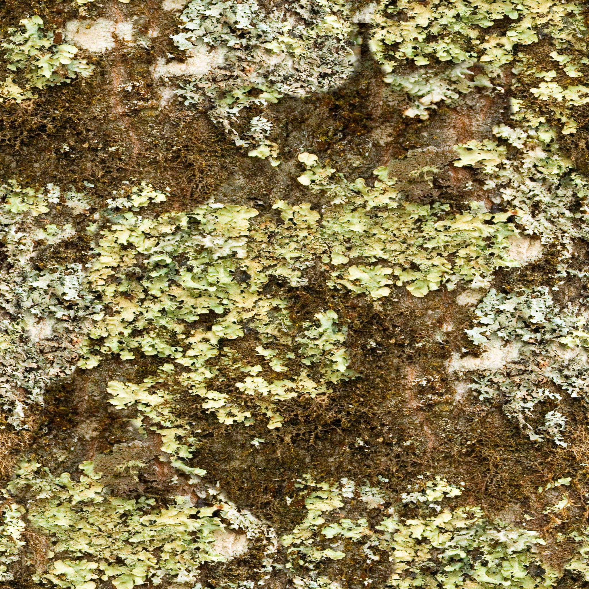 Brown Lichen Covered Bark.jpg