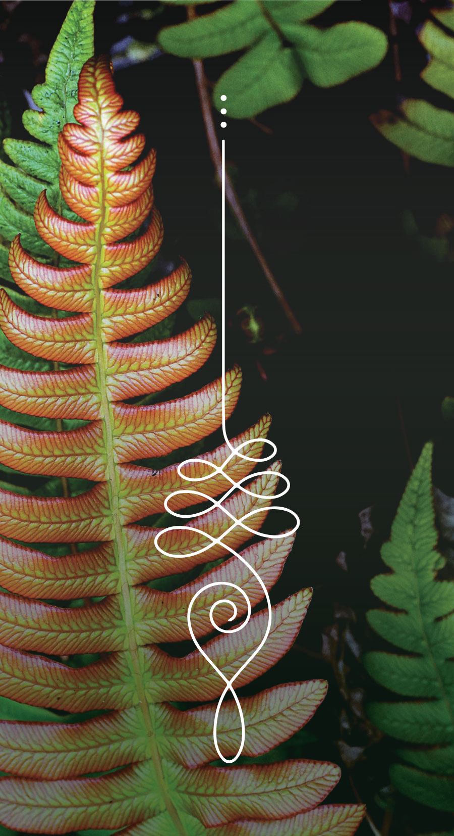 Flourish-7week-MediaKit-Graphics-2.jpg