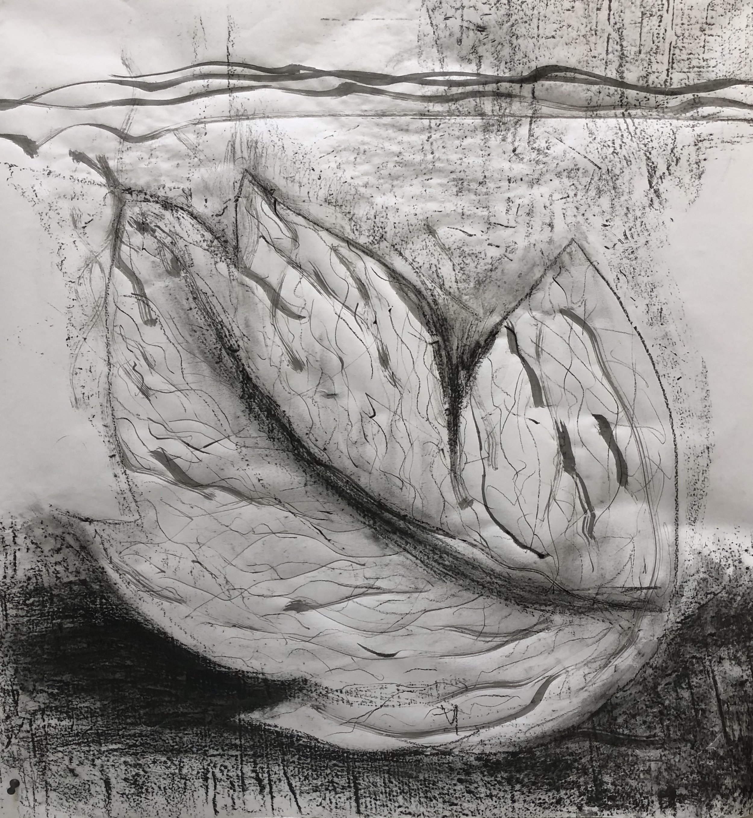 Leaf drawing graphite and ink by Namita Paul.jpg