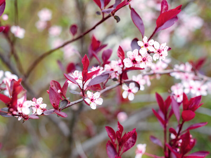 Guelph_flora_800x600.jpg